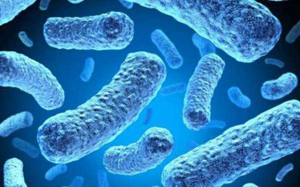 Чувствительность к антибиотикам расшифровка r s