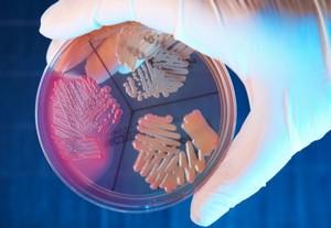 Гемолитический стрептококк лечение антибиотиками